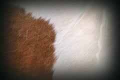 Texture of pony fur Stock Photos