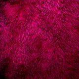 Texture pourpre de fourrure Photographie stock libre de droits