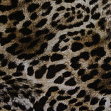 Texture of print fabric striped leopard Royalty Free Stock Image