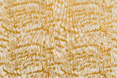 Texture of print fabric striped tiger. For background royalty free stock photo