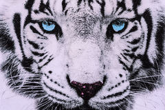 Texture of print fabric striped the white tiger face stock images