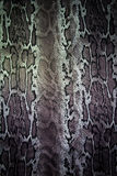 Texture of print fabric stripes snake for background. Closeup Royalty Free Stock Images