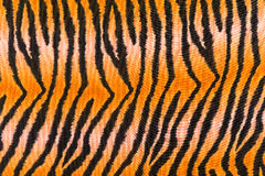 Texture of print fabric stripes tiger Stock Photos