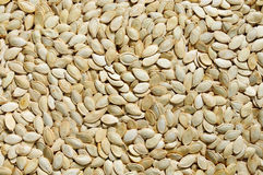 Texture of the pumpkin seeds Stock Images