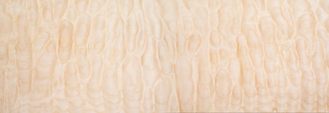 Texture of Quilted Maple. Used as background Royalty Free Stock Photography