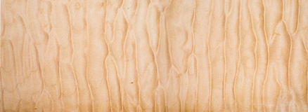 Texture of Quilted Maple. Used as background Stock Photos