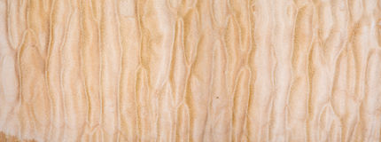 Texture of Quilted Maple Royalty Free Stock Photography