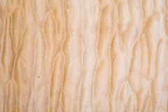 Texture of Quilted Maple. Used as background Royalty Free Stock Photos