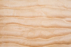 Texture of Quilted Maple Stock Image