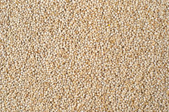 Texture of Quinoa grains Stock Photo
