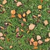 Texture réaliste de photo d'herbe verte dans la haute résolution images stock