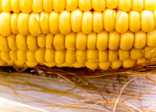 Texture of corn cob sweet maize Royalty Free Stock Photo