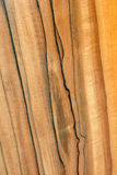 Texture of real wood Stock Images