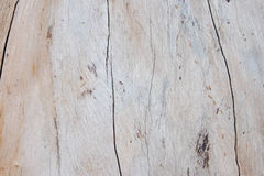 Texture of real wood that look hard Stock Photos