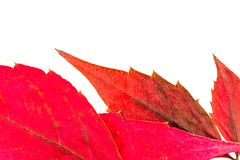 Texture with autumn leaf veins stock images