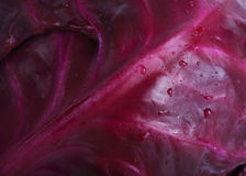 Texture of red cabbage Royalty Free Stock Photo