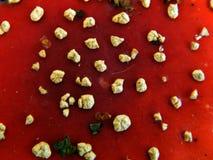 Texture red cap mushroom Amanita Stock Image