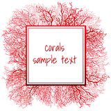 Texture of red coral and frame for text Stock Images