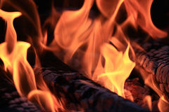 Texture red fire embers. In bonfire Royalty Free Stock Photos
