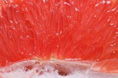 Texture of red grapefruit pulp. horizontal Stock Images
