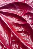 Texture of red leaf Stock Photo