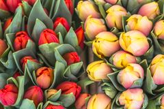 Texture of Red and orange tulips in a fresh spring bouquet in the market stock images