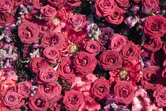 Texture of red roses Stock Photos