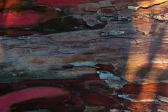 Texture of red tree bark stock image