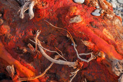 Texture of red wood and pebbles on the beach. In high quality Royalty Free Stock Photography