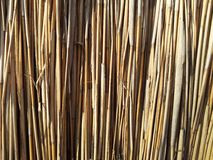 Texture reed cane dry close up Stock Photography