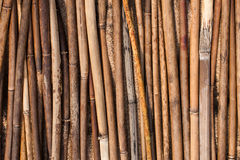 Texture reed. Stacked in the sand stick reed Stock Image