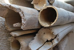 Texture of the ring of bamboo trees. Bamboo cutting trees texture rind stock photos