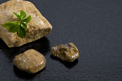 Texture rock. There is texture rock with water drops Stock Images
