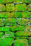 Texture of rock wall overgrown with moss Royalty Free Stock Photos