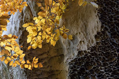 Texture of the rocks and beech branch with yellow leaves Stock Image