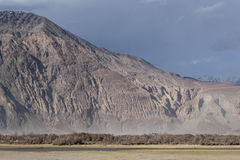 The texture of the rocky mountain behind the drying trees. The texture of the rocky mountain behind the drying trees such as great nature in Nubra Valley, Leh Royalty Free Stock Photo