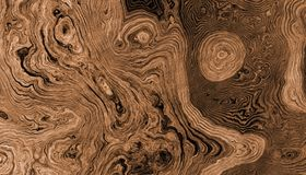 Tree roots curly background. Texture of roots of tree with wavy lines and age rings. Abstract background Royalty Free Stock Photos