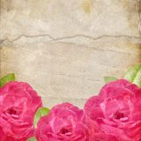 Texture with a Roses Stock Photos