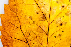 Texture with rotten leaves Royalty Free Stock Images