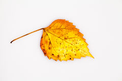 Texture with rotten leaves Stock Photo