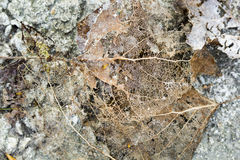 Texture with rotten leaves with fibers on a concrete surface royalty free stock photos