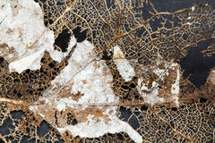 Texture with rotten leaves with fibers stock images