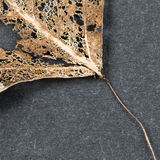 Texture with rotten leaves with fibers from a leaf Stock Images
