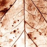 Texture with rotten leaves with fibers. Filigree abstract royalty free stock photos