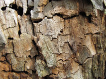 Texture of rotten shrunk dry wood Royalty Free Stock Images