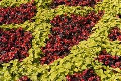Texture rouge de fleurs et de lames de vert Photos stock