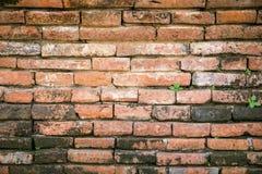 Texture rouge de mur de briques de cru Photos stock
