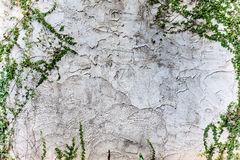 Texture rough of cement wall Royalty Free Stock Photography