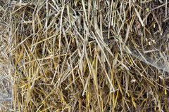 The texture of the round bale of straw close-up. Royalty Free Stock Image