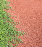 Texture of running track. Cover with plant Stock Images